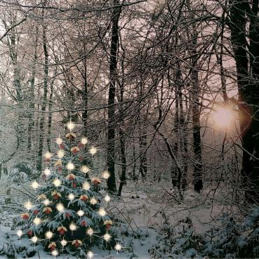 Weihnachtsbaum; Bildrechte: Fotograf jodylehigh über pixabay.com