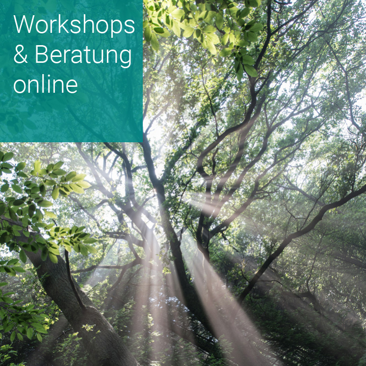 Digitale Workshopmoderation und Online-Beratung