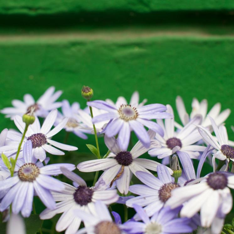 Danke für die Blumen, Teilnehmerstimmen zur systemischen Ausbildung
